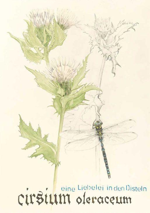 Cirsium oleraceum – Distel