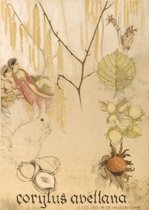 Corylus avellana – Haselnuss