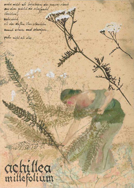 Achillea millefolium – Schafgarbe