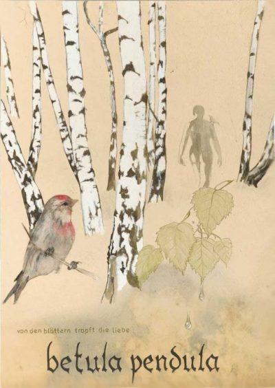 Betula Pendula – Die Hänge-Birke