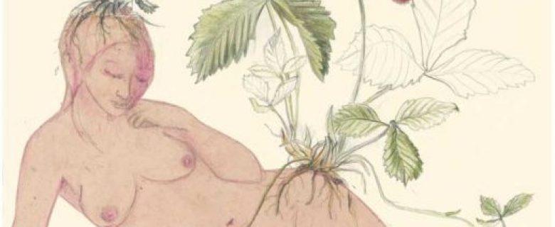 Fragaria Vesca– Walderdbeere