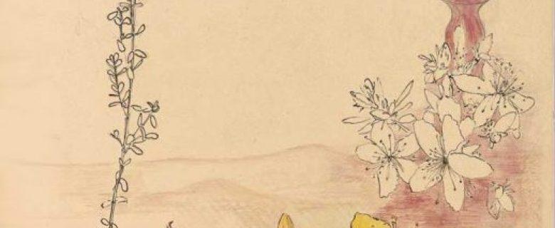 Hypericum Perforatum– Johanniskraut