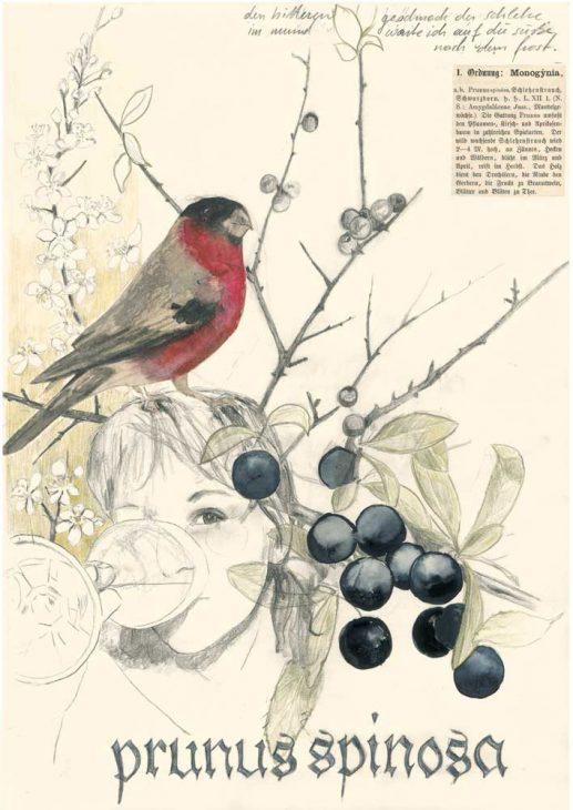 Prunus spinosa – Schlehe