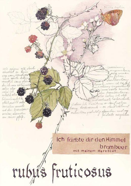 Rubus fruticosus – Brombeere
