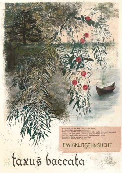 Taxus Baccata– Eibe