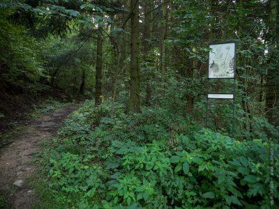 Schauensteinweg – Dryopteris