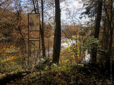 Schauensteinweg– Aquilegia vulgaris